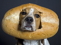I just found out my dog was inbread! (Paguma / Darren) Tags: dog silly bread hound floyd