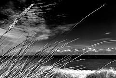 Morgens am Strand (dubdream) Tags: ocean sea blackandwhite bw white seascape black beach strand germany landscape nikon meer shoreline balticsea sw schwarzweiss ostsee schleswigholstein b6w norddeutschland heiligenhafen explored dubdream