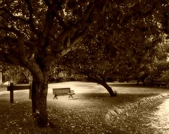 ..   (Bnafsj) Tags: tree bench photography nikon place memories australia goldcoast