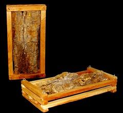 Cachepô + Casca Valor: R$20,00 (Orquideas Flor de Gaia) Tags: casca cachepo
