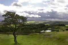 Looking West (Laura donothey) Tags: england tree landscape cloudy hills northumberland cumbria hadrianswall walltown