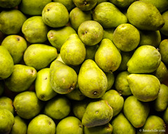 Pears (H. Hille) Tags: thanksgiving wallpaper green fruit catchycolors germany garden 3d postcard harvest crop pear helene yield garten erntedank schleswigholstein birne ernte obst postkarte pyrus canonef50mmf14usm eutin birnen ostholstein canoneos1dmarkiii