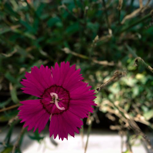 Livng Color Violet