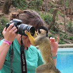 "Curious Rescued Monkey at La Senda Verde <a style=""margin-left:10px; font-size:0.8em;"" href=""http://www.flickr.com/photos/14315427@N00/6161041361/"" target=""_blank"">@flickr</a>"