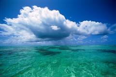 نجاة الشيخ محمد صالح المنجد الغرق