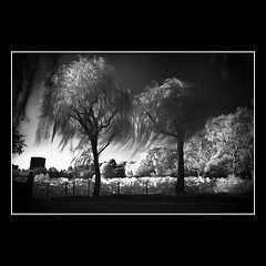 Wind (t.a.p masa) Tags: street bw ueno snap infrared epson 15mm rd1s