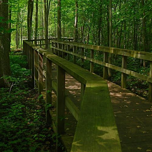 Huckleberry Swamp 1