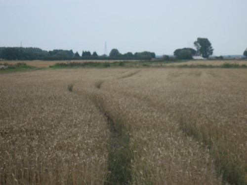 Fields Near Ely