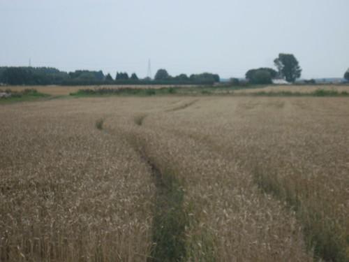 Fields Near Ely