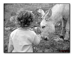 Platero y Él (Alberto Jiménez Rey) Tags: boy white black byn blanco photography monocromo flickr child y negro donkey bn burro alberto estrellas rey asno niño jimenez albjr mygearandme albjr7