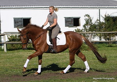 Lafayette (neulands) Tags: horse cheval jung lafayette leo youngster pferde sixmonths filly progeny dressage stute neulandstud salaliltingmelody 3jhrig angeritten fontbarbados