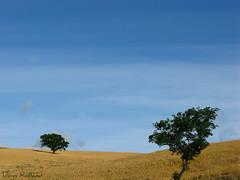 La ou le vent me porte (Domi Rolland ) Tags: france nature canon europe bleu ciel arbre millau aveyron 2011 midipyrnes g9