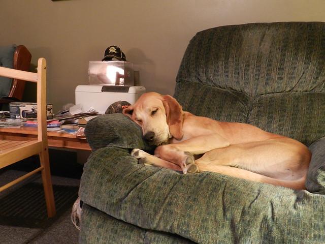 The sleeping hound