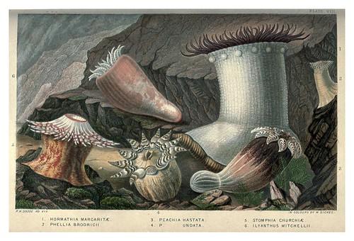 009-Actinologia Britannica… 1860- Philip Henry Gosse