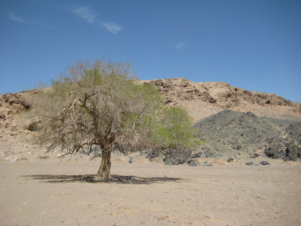 Дерево, скалы и небо