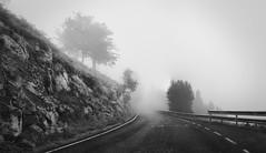 En la niebla (Fernando Rey) Tags: bw panorama tree arbol atardecer carretera foggy panoramic bn niebla