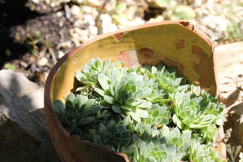 in a broken pot