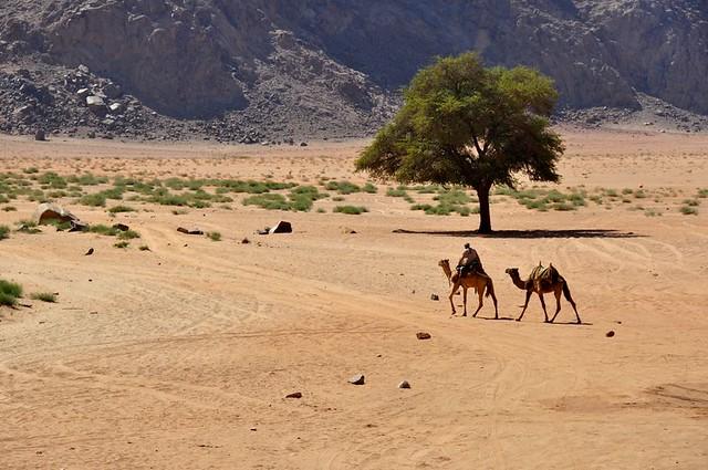Lawrence's Spring Wadi Rum