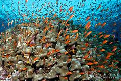 Full of Lives (Lea's UW Photography) Tags: underwater redsea fins anthias unterwasser elphinstone tokina1017mm canon7d lealee