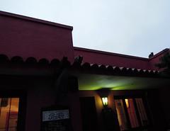 . (:::alejandra:::) Tags: cats cat uruguay streetlight streetlamp pepsi tinroof