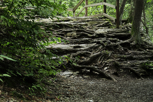 Dingman's Falls Root Stairs