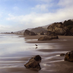 Stinson Beach, California (solecism) Tags: ocean california sea bird beach landscape coast rocks shore stinsonbeach atlast beautifulweather