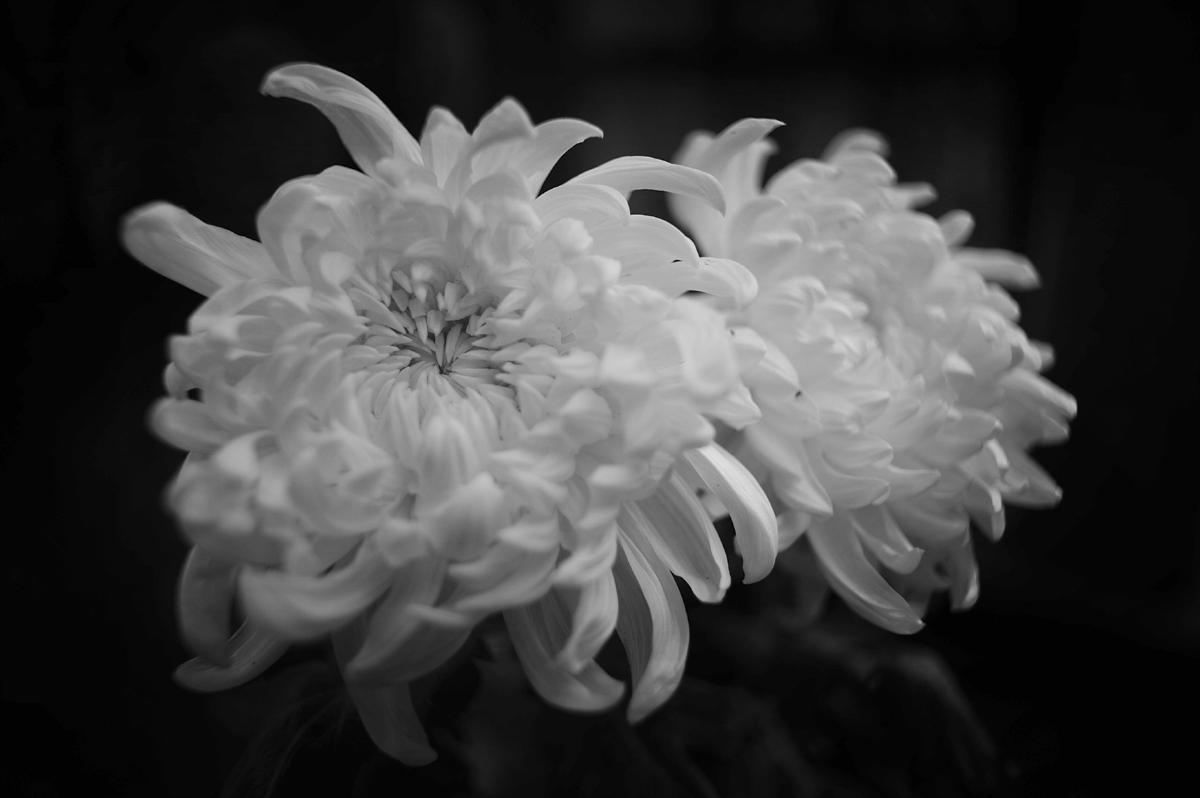 2011-09-04 mum