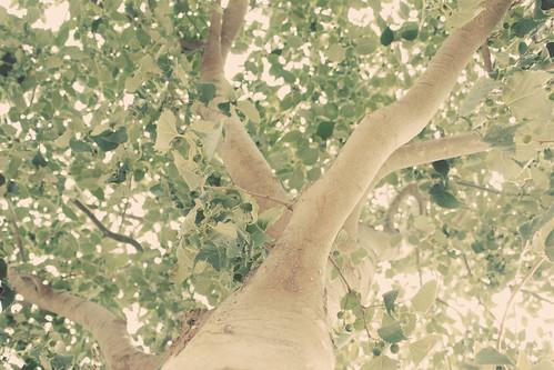Día 4 - Árbol