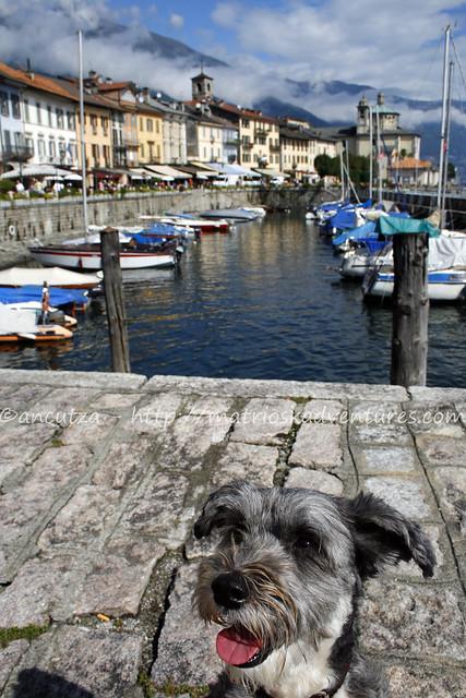 Immagine cane simpatico Cannobio