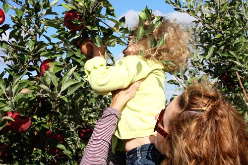 Auttie-reach-high-apple