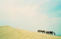 沙湖骑骆驼,III (♥ Mengjie) Tags: china travel animal landscape asia desert camel journey 中国 风景 biztrip 旅行 ningxia 动物 出差 yinchuan 沙漠 亚洲 骆驼 宁夏 银川