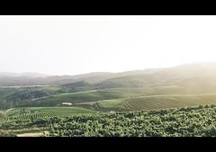D.O Rias Baixas (josusache) Tags: españa landscape spain wine galicia vineyards 1750 tamron riasbaixas vino rias bajas viñas albariño