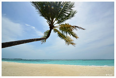 A Lazy Coconut Tree (B Foster) Tags: tree beach lens four seasons coconut flare maldives leaning kuda sideways huraa uniquemaldives