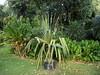 DSC02695 (rantavani) Tags: plantas tropicais