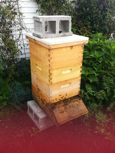 Our New And Taller Hive