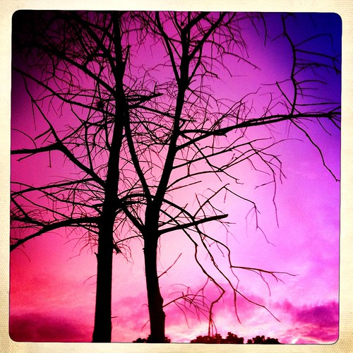47/365- Purple Dawn by elineart