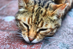 The Cat . (Maram Saud  ) Tags: cat sleep saud   maram     maramsaud