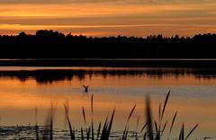 Tuusulanjrvi (mikakukk) Tags: sunset lake nature suomi finland evening ilta luonto jrvi auringonlasku