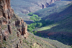 Grand Canyon National Park: Indian Garden 4278