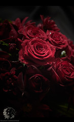 (Rawan Mohammad ..) Tags: red roses flower rose photography nikon photographer photos australia brisbane mohammed saudi arabia tamron mohammad 2010 rn  2011 rawan        d300s rnona     almuteeb