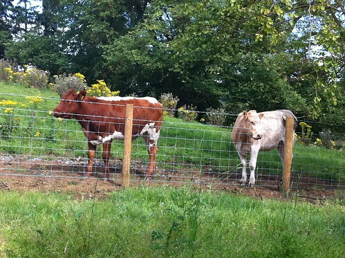 The New Neighbours!