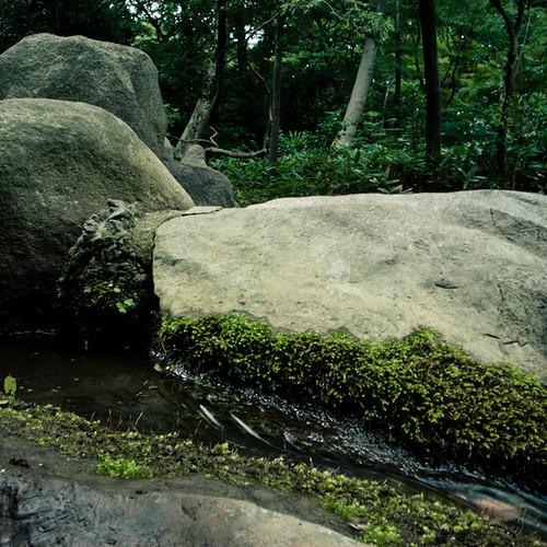 Rish Rush Brook, Rikugien Garden Tokyo