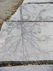 BaumSchattenBaum III (MKP-0508) Tags: shadow sculpture tree berlin skulptur ombre publicart stein arbre schatten baum