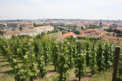 "Prague Castle (Pražský hrad) vineyard, Prague (Prag/Praha) • <a style=""font-size:0.8em;"" href=""http://www.flickr.com/photos/23564737@N07/6083173128/"" target=""_blank"">View on Flickr</a>"