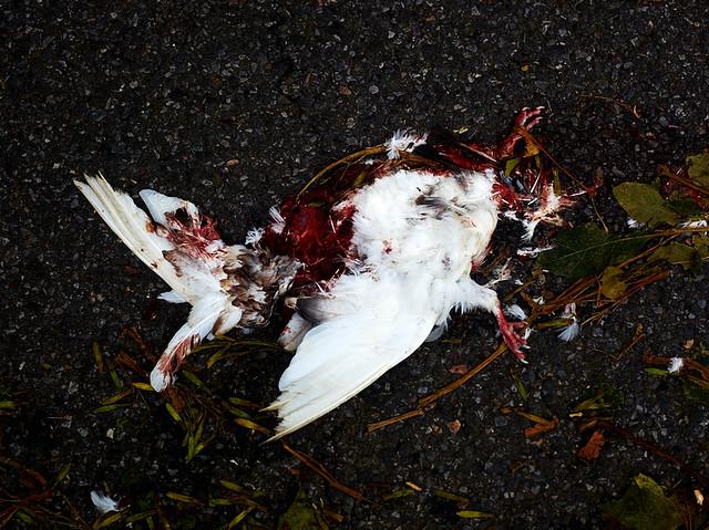 smashed bird