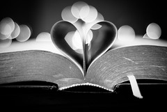 Book of Love (Betsy Cole Photography) Tags: love lights book dof heart bokeh hide page bible