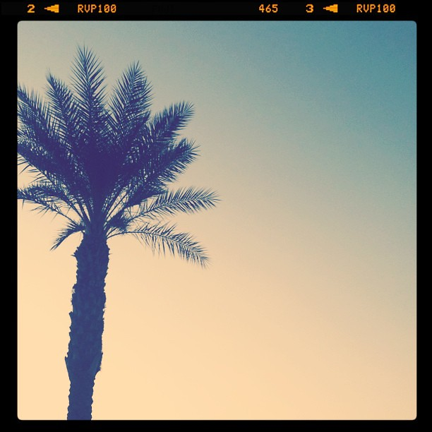 Palm. #lookingup