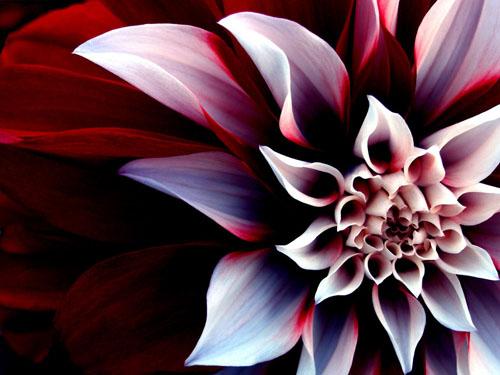 Baller_Flower