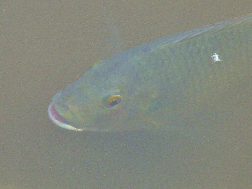 03-09-2011-sunbathing-fish