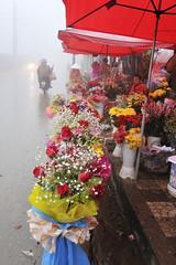 85_LAO81910108 (TC Yuen) Tags: vietnam sapa hmong terracefarming locai